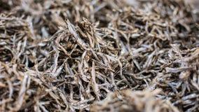 Malawian dried fish (usipa) Stock Photography