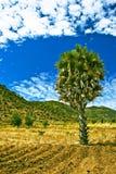 Malawian landscape Royalty Free Stock Image