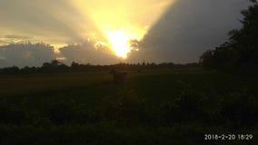 Malawili室外米的领域 库存照片