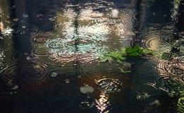 Malaxez sous la pluie, temps de fond de ville de nuit Image libre de droits