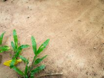 Malay Grass on The Brown Soil royalty free stock photos