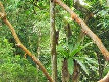 Malayan colugo Stock Images