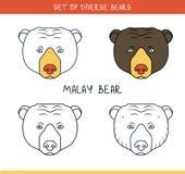 Malayan sun bear. Set  face, heads bear in lines Royalty Free Stock Photography