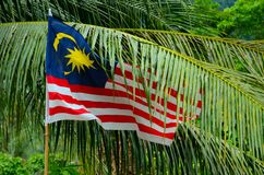 Malaysia flag flutters among tropical tree leaves Royalty Free Stock Photography