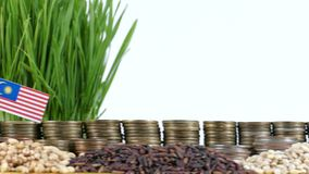 Malaysia flag waving with stack of money coins and piles of wheat. And rice seeds stock video