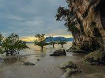 Malaysia - Magrove och havet royaltyfria foton