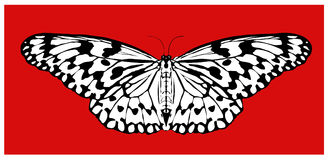 Malaysia, Penang: Butterfly vector Stock Photo