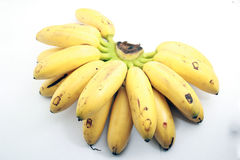 Malaysia's local bananas on white. Bunch of local bananas called ladies fingger on isolated background Royalty Free Stock Photo