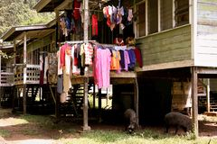 Poverty young children watching wild boar underneath their houses stock photo