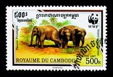 Malaysian Elephant Elephas maximus hirsutus, WWF - Malaya Elephant serie, circa 1997. MOSCOW, RUSSIA - NOVEMBER 24, 2017: A stamp printed in Cambodia shows Royalty Free Stock Photo