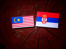 Malaysian flag with Serbian flag on a tree stump isolated. Malaysian flag with Serbian flag on a tree stump royalty free stock photography