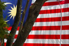 Malaysian Flag and Tree Stock Images