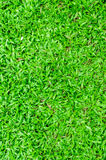 Malaysian grass floor background Royalty Free Stock Photography
