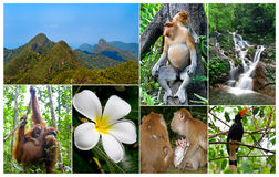 Malaysian Jungle Stock Photo
