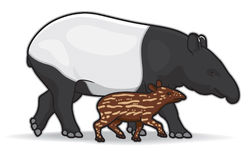 Malaysian Tapirs. Illustration of a mother and infant tapir Stock Photos