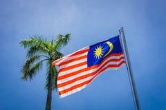 Malaysisches fahnenschwenkendes außer einer Palme Lizenzfreie Stockfotos