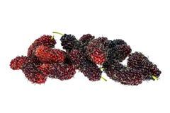 Malberry στο άσπρο υπόβαθρο στοκ εικόνες