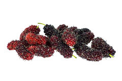 Malberry on the white background Stock Photo
