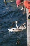 Malcesine on Lake Garda Italy Stock Images