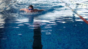Malchih professionally well in the pool. Malchih professionally swims well in the pool stock footage
