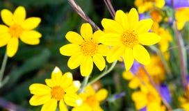 Mald räkning Flora Summertime Hurrican Ridg för berg vildblommor Arkivbilder