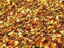 mald skog Royaltyfria Bilder