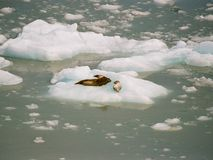Maldiga este hielo es frío imagen de archivo