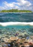 maldive礁石 免版税图库摄影