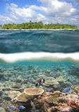 Maldive Reef Royalty Free Stock Photography