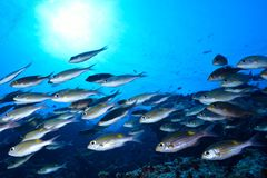 Maldivean-Meer lizenzfreies stockfoto