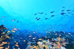 Maldivean-Meer stockfoto