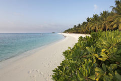 Maldiverna Arkivbilder