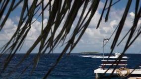Maldiverna en snabb motorbåt seglar över havet lager videofilmer