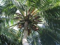 Maldiverna palm royaltyfri fotografi