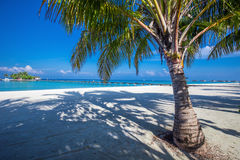 Maldiverna semesterortbro Tropisk ö med den sandiga stranden, palmträd och tourquisefrikändvatten Royaltyfri Bild