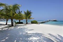 Maldiverna strand Royaltyfria Bilder