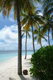 Maldives. Palm trees on an island beach in the Maldives royalty free stock photography