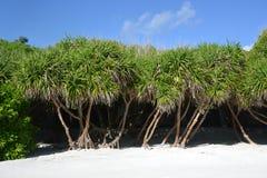 Maldives image stock