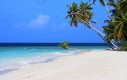 Maldives. Exotic beach under a blue sky, Maldives Stock Photo