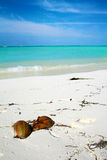 maldives arkivbilder