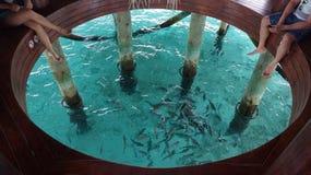 maldives Immagine Stock