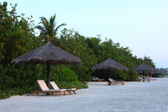 Maldives beach. Maldives beautiful beach in the sunrise Stock Image