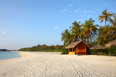 Maldives beach. Maldives beautiful beach in the sunset Stock Photography