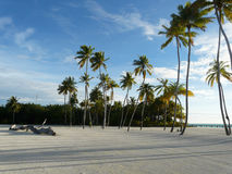 Maldives beach. Coconut trees stand against sea wind Stock Images