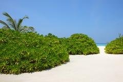 Maldives beach Stock Photos