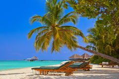 Maldives beach Stock Photography