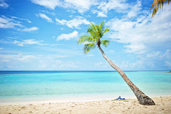 Maldives beach palm. Stock Images