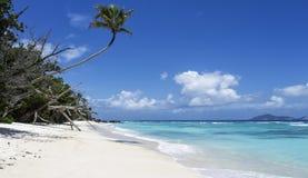 Maldives beach with palm trees. Beautiful sandy beach with palm trees and blue sea Stock Image