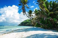 Maldives beach with palm trees Royalty Free Stock Photos