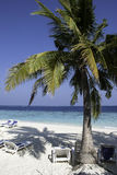 Maldives Beach Scene. Lounge Chairs at the beach of an maldivian Island Royalty Free Stock Photos